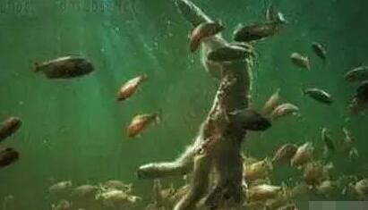 令人谈之色变 揭秘亚马孙恐怖食人鱼