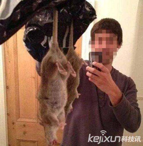 英国现60cm长巨大老鼠 快餐或导致老鼠基因变异