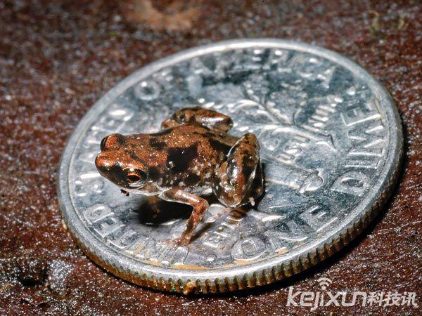 盘点地球十大新物种:夜光蟑螂和竖琴海绵