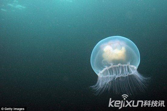 震惊!人类的视觉竟然源于7亿年前的水母