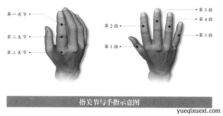 在进行高抬指训练之前,我们有必要先来了解一下手指的结构,这在很多人眼里可能是一个简单到可以被忽略的问题,然而了解这些却是我们科学运指的前提。  正常情况下,一只手有五个手指,分别称为大拇指、食指、中指