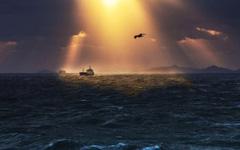 海燕与船长