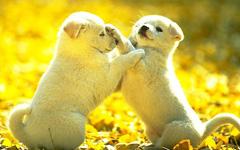 白狗和黑狗的争吵