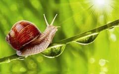 做一只充满细节的蜗牛
