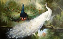 天鹅和孔雀
