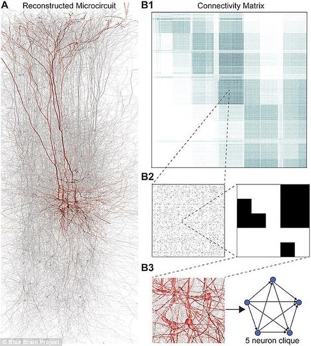 """研究人员使用一种叫做""""代数拓扑""""的数学模型,确定软件建立的虚拟大脑中的几何结构位置。为了测试该模型,研究人员在真实大脑组织上进行了实验。"""